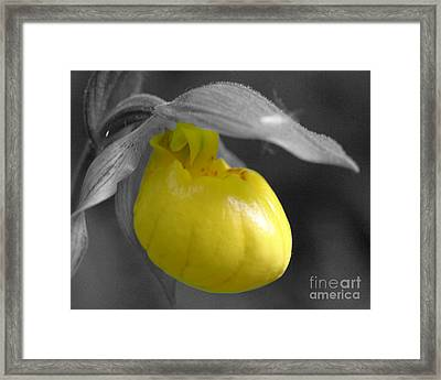 Framed Print featuring the photograph Yellow Lady Slipper Partial by Smilin Eyes  Treasures