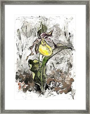 Yellow Lady's Slipper Framed Print
