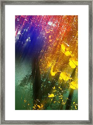 Yellow Leaf Along The Lake Framed Print