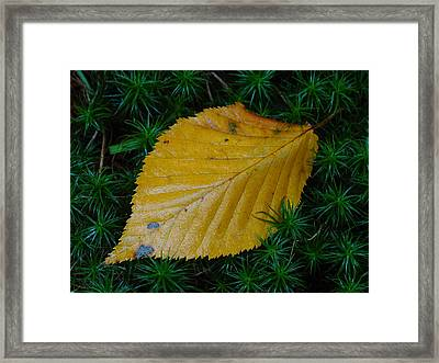 Yellow Leaf Framed Print by Juergen Roth
