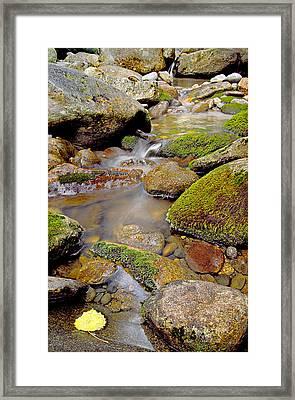 Yellow Leaf Stair Falls Photo Framed Print