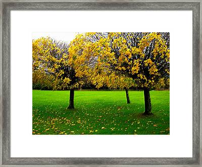 Yellow Leaves At Muckross Gardens Killarney Framed Print