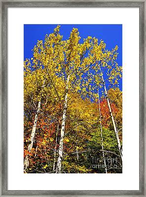 Yellow Leaves Blue Sky Framed Print