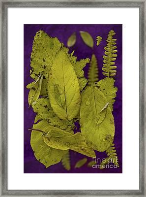 Yellow Leaves Framed Print by Masako Metz