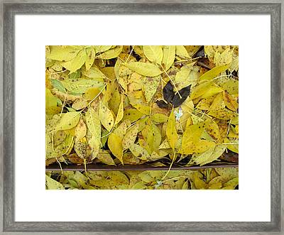 Yellow Leaves On The Ground  Framed Print by Lyle Crump