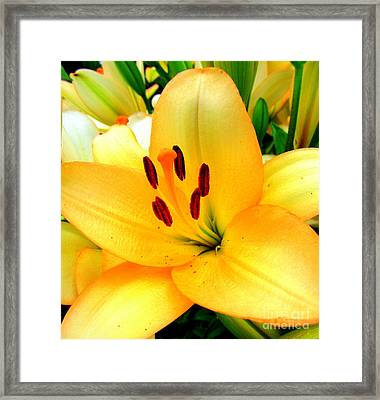 Framed Print featuring the photograph Yellow Lilies 1 by Randall Weidner