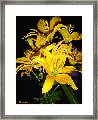 Yellow Lilies Framed Print by Joanne Smoley