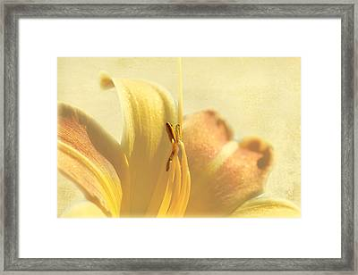 Yellow Lily Framed Print by Gary Smith