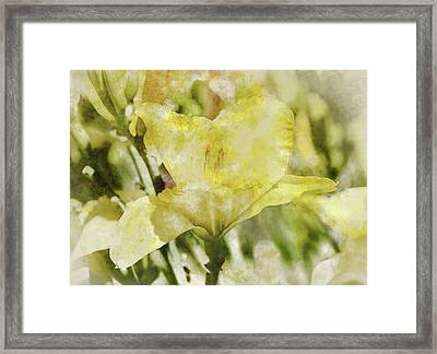 Yellow Lily In The Garden Digital Art Watercolor Framed Print by Brandon Bourdages