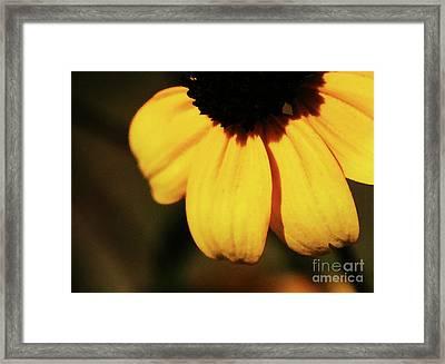 Yellow Framed Print by Linda Shafer