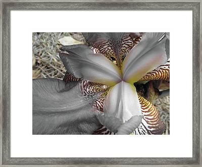 Yellow Lines Framed Print by Michele Caporaso