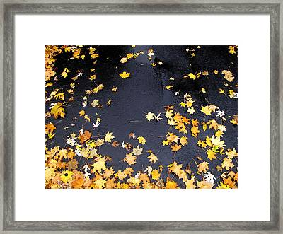 Yellow Maple Leaves On Pavement  Framed Print by Lyle Crump