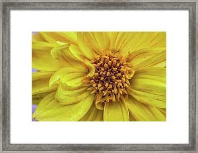 Yellow Framed Print by Martin Newman
