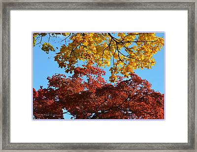Yellow Meets Red Framed Print by Sonali Gangane