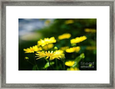 Yellow Moment Framed Print