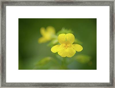 Framed Print featuring the photograph Yellow Monkey Flower by Alexander Kunz
