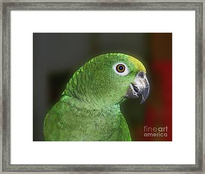 Framed Print featuring the photograph Yellow Naped Amazon Parrot by Smilin Eyes  Treasures