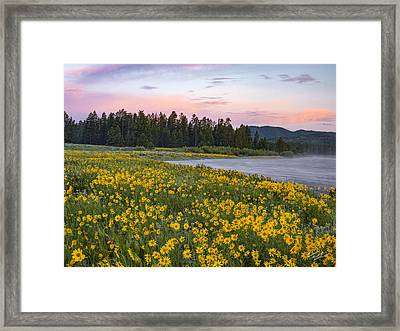 Yellow Of Spring Framed Print by Leland D Howard