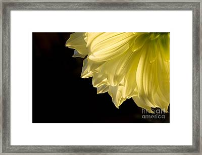 Yellow On Black Framed Print by Ronald Hoggard