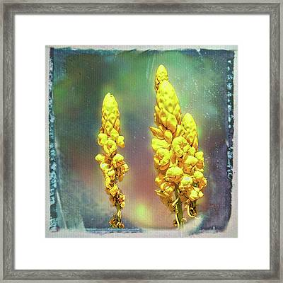 Framed Print featuring the photograph Yellow On Blue by Lewis Mann