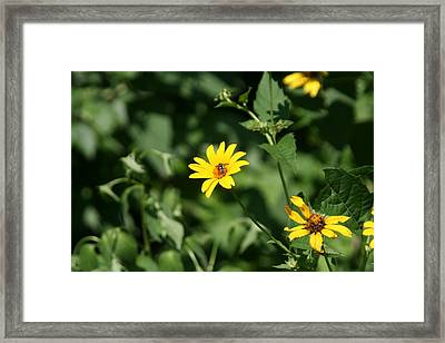 Yellow On Yellow Framed Print by Gregory Jeffries