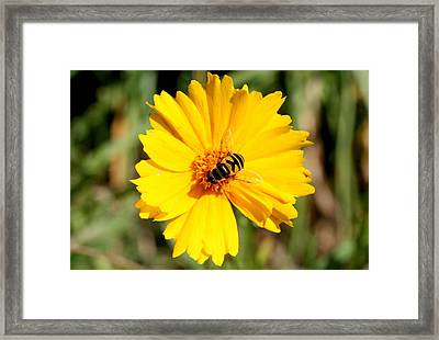 Yellow On Yellow Framed Print by Jason Hochman