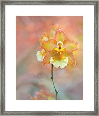 Framed Print featuring the photograph Yellow Orchid by Ann Bridges