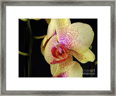 Framed Print featuring the photograph Yellow Orchid by Dariusz Gudowicz