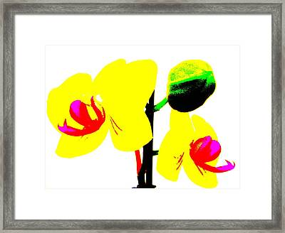 Yellow Orchids Abstract Framed Print by Beth Akerman