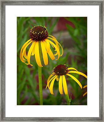 Framed Print featuring the photograph Yellow Pair by David Coblitz
