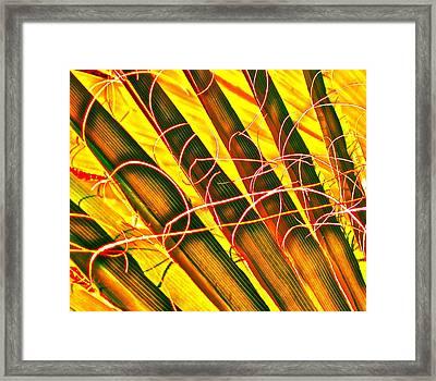 Yellow Palm Fun Framed Print by Gwyn Newcombe