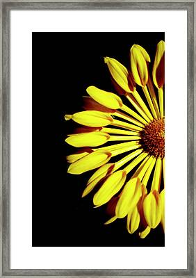 Yellow Petals Framed Print