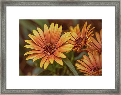 Yellow Petals #g3 Framed Print