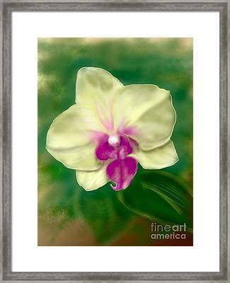 Yellow Phalenopsis Framed Print