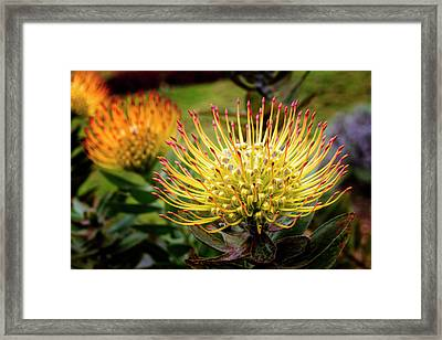 Yellow Pin Cushion Framed Print by Kelley King