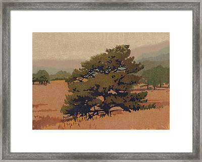 Yellow Pine Framed Print