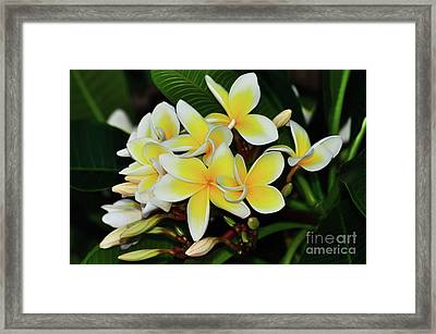 Framed Print featuring the photograph Yellow Plumeria By Kaye Menner by Kaye Menner