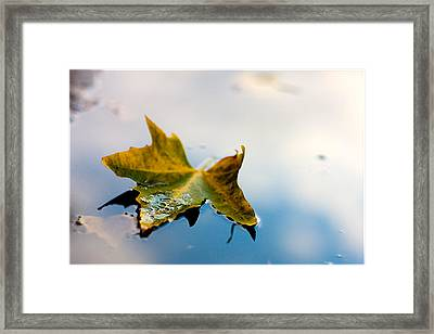 Yellow Plus Blue Equals Edge Framed Print by Janell Anderson