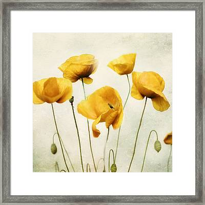 Yellow Poppies - Square Version Framed Print
