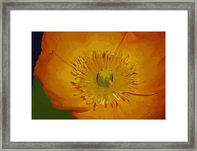 Framed Print featuring the photograph Yellow Poppy by Donna Bentley