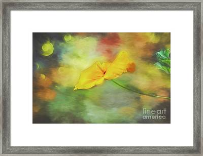 Yellow Poppy Framed Print by Jutta Maria Pusl