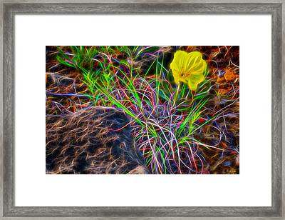 Yellow Primrose Electrify Framed Print