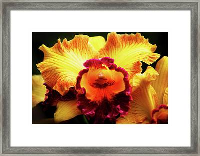 Framed Print featuring the photograph Yellow-purple Orchid by Anthony Jones