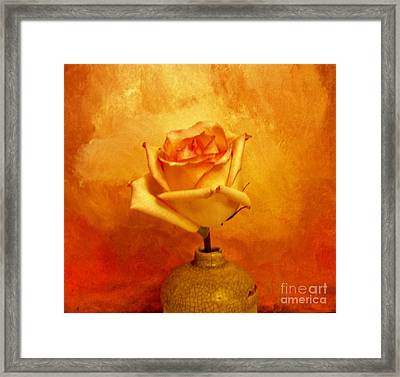 Yellow Red Orange Tipped Rose Framed Print by Marsha Heiken
