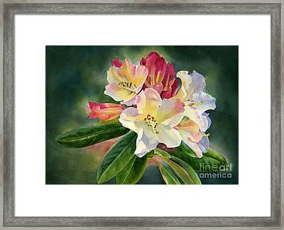 Yellow Rhododendron Dark Background Framed Print by Sharon Freeman