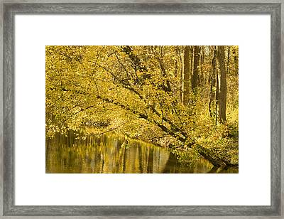Yellow River Framed Print by Ryan  Krueger