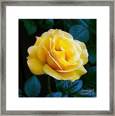 Yellow Rose 06 ... 53.14 Rose Rose Image Framed Print
