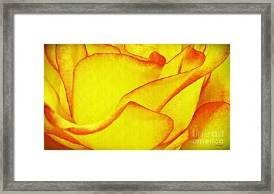 Yellow Rose Abstract Framed Print