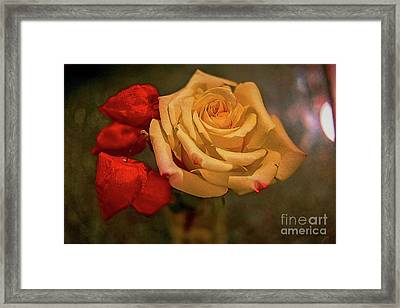 Framed Print featuring the photograph Yellow Rose And Chinese Lanterns by Diana Mary Sharpton