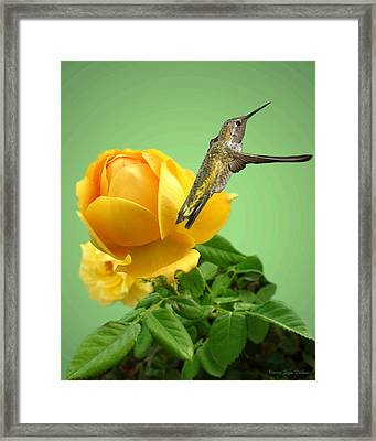 Yellow Rose And Hummingbird 2 Framed Print by Joyce Dickens